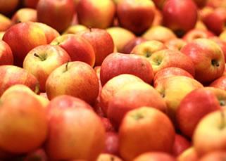 Cultivo de Manzana